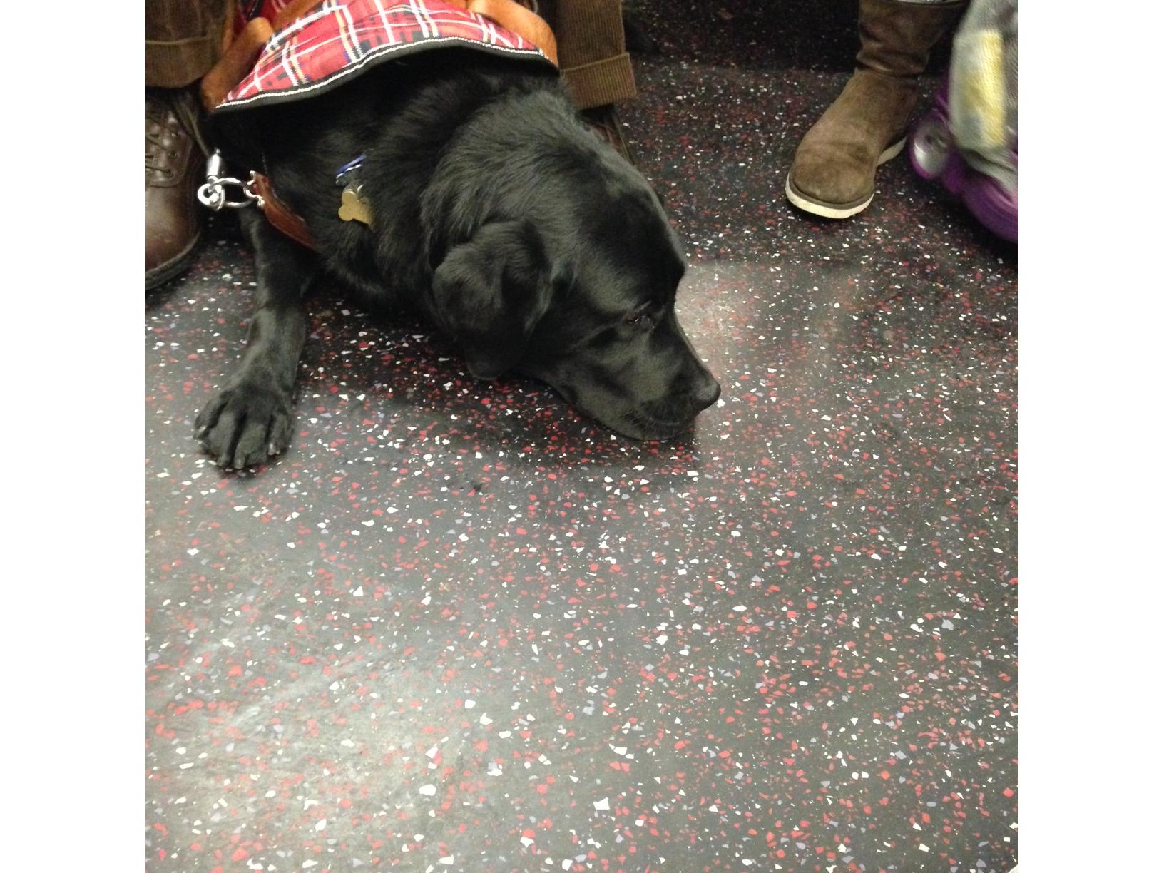 sad service dog