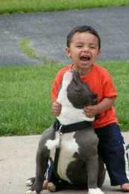 pitbull with kid