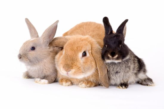 Rabbits_Three