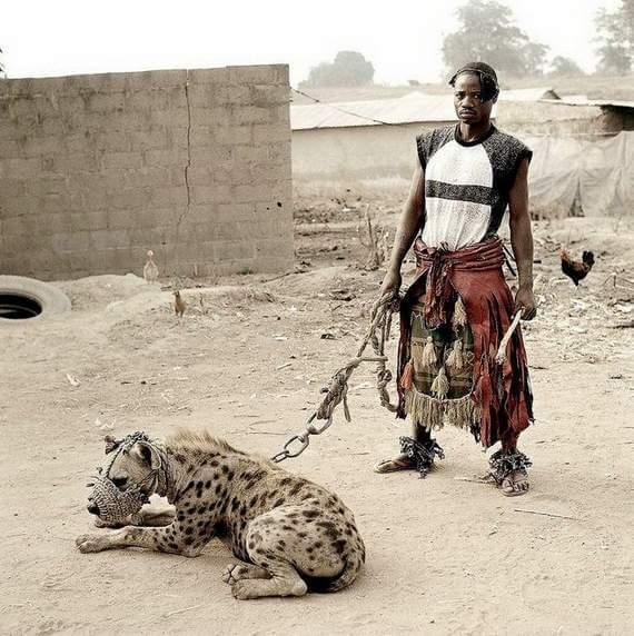 man hyena